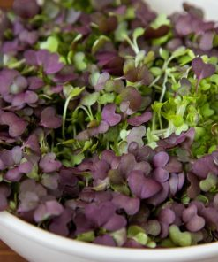 Sprouts, Microgreens & Baby Greens