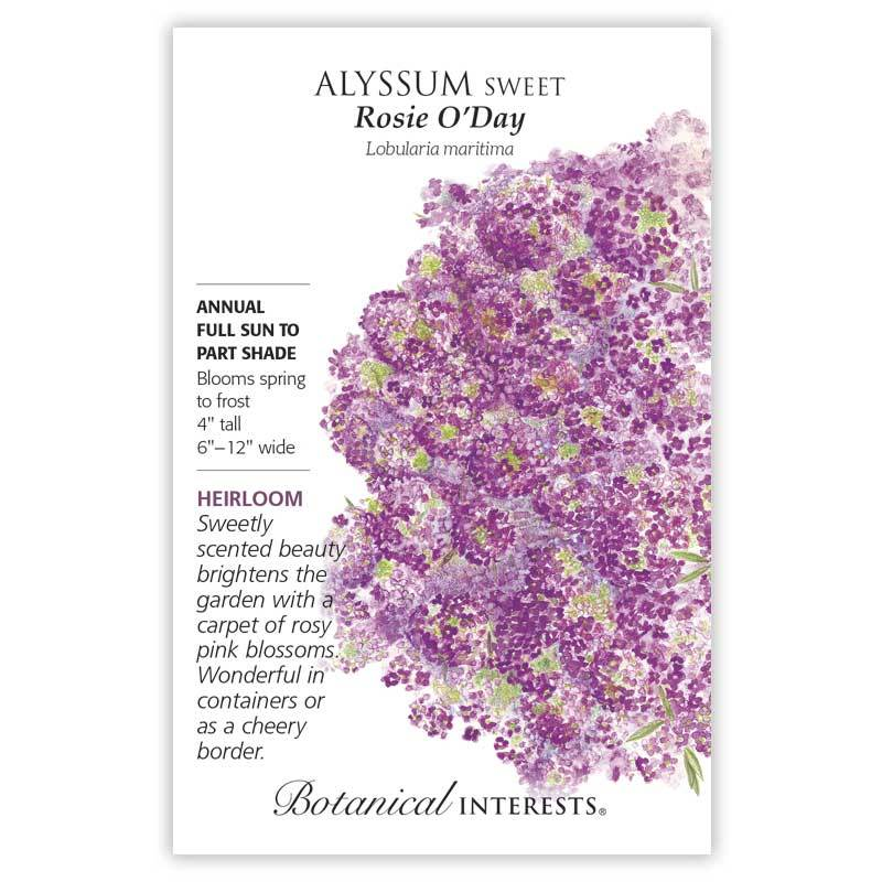 250 mg Rosie O/'Day Sweet Alyssum Seeds